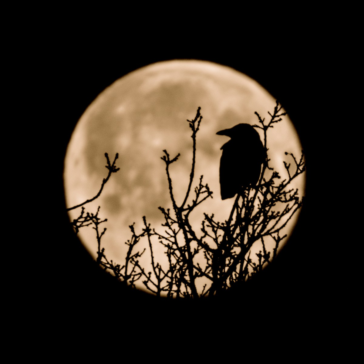 Maan en vogel