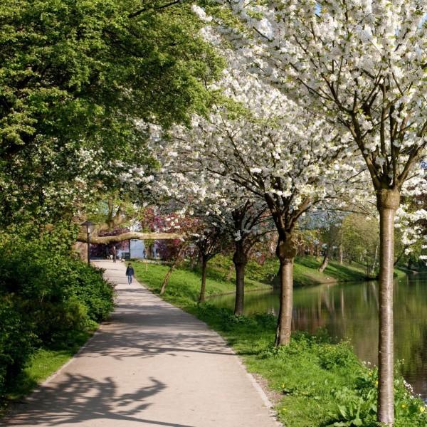 De route naar Sonnenborgh