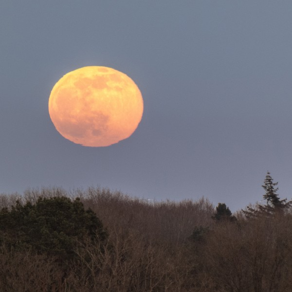 Opkomst volle maan